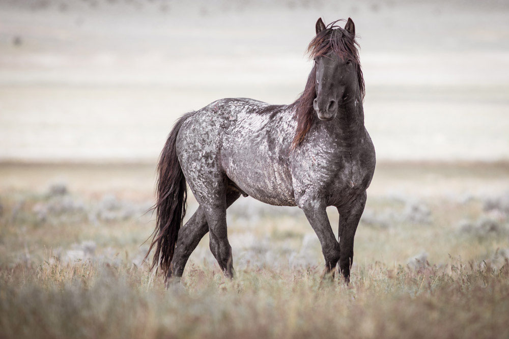 Wild horse on the plains