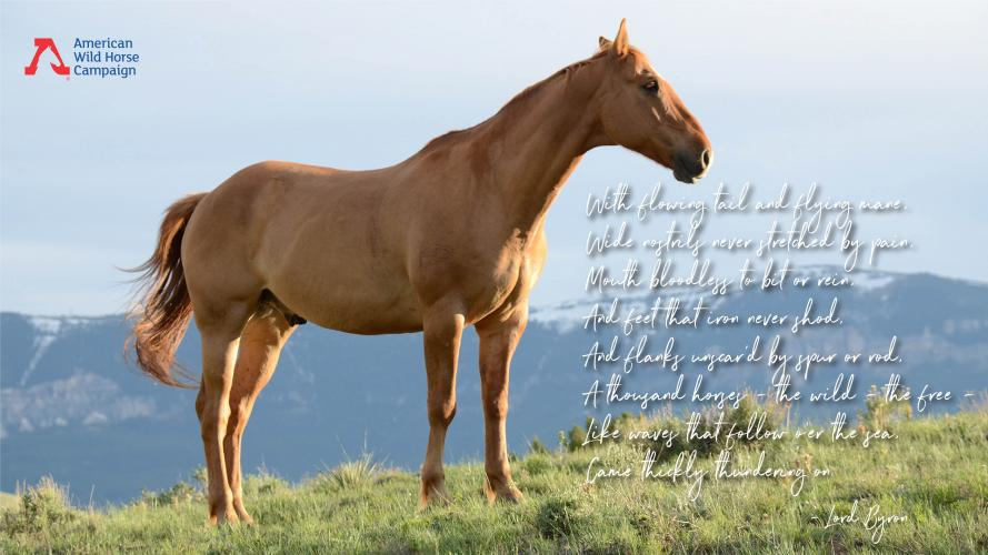 5 Best Quotes About Wild Horses | American Wild Horse Campaign