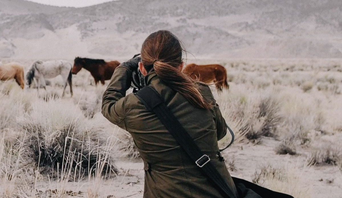 Wild Horse Photographers American Wild Horse Campaign
