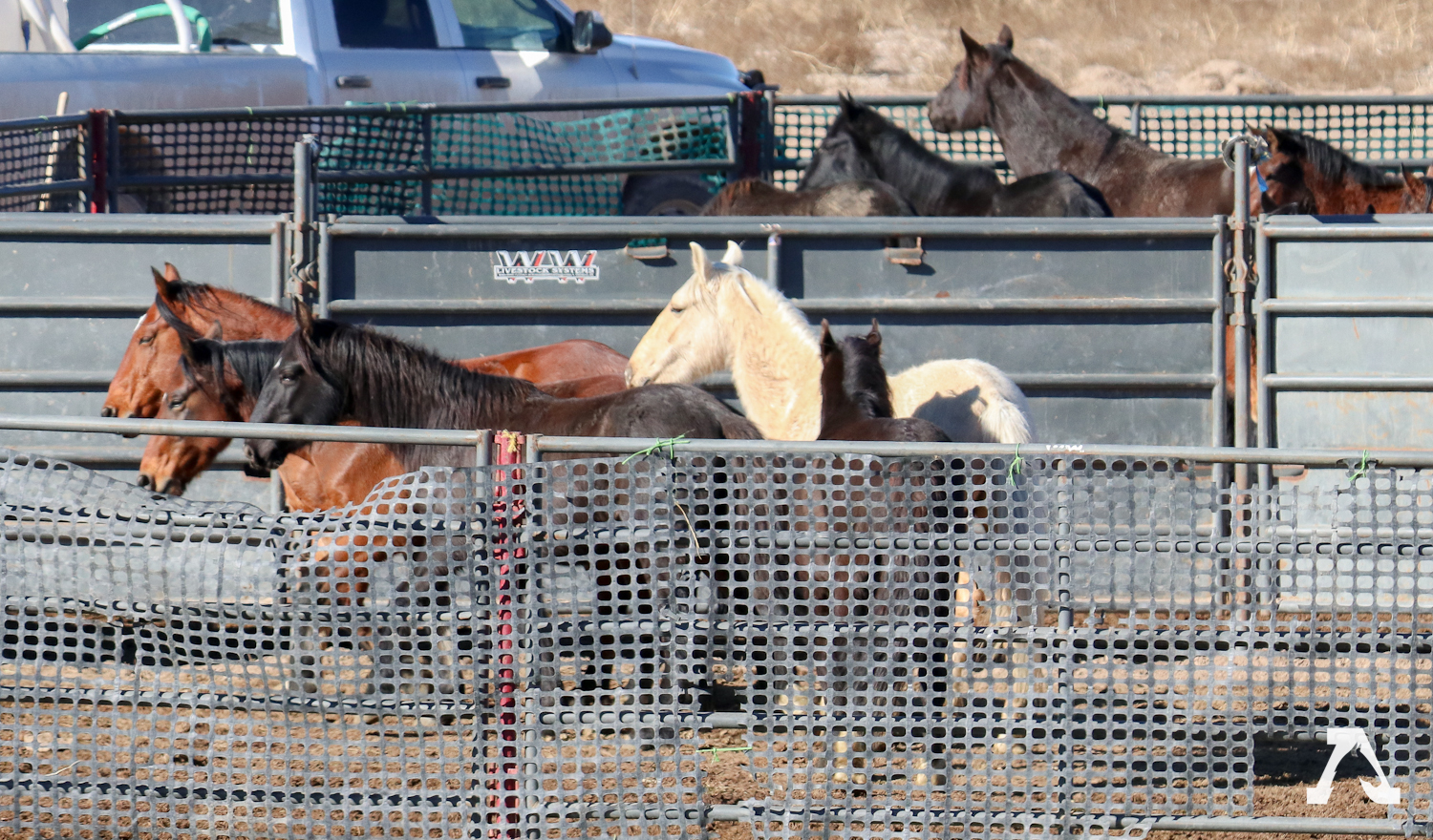 2018 Silver King Roundup Continues | American Wild Horse